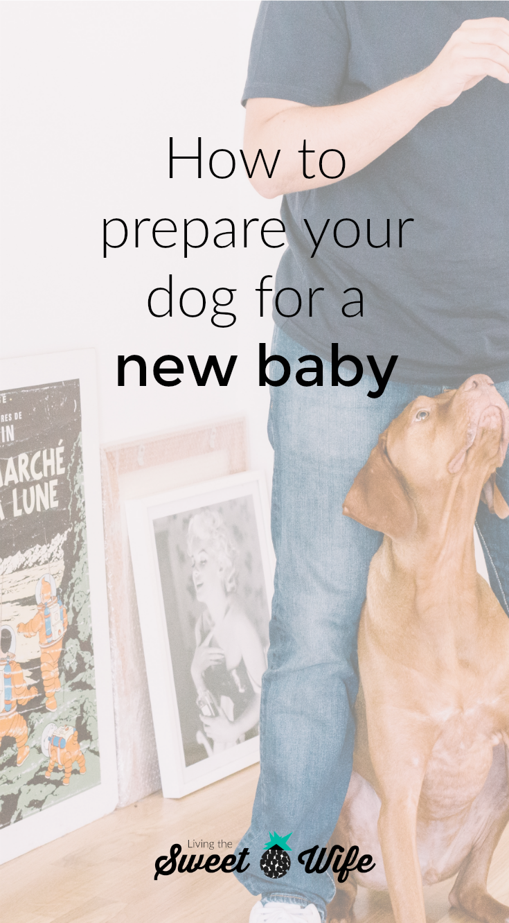 Bringing home a new baby can be an exciting AND scary time! Every member of your family, including the furry ones, are going to face a lot of changes and at times, if can be hard for dogs to cope- even the most family-friendly ones! But don't lose hope, there are several ways you can prepare your dog for the arrival of a newborn before and during the transition.